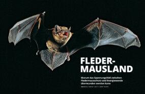 Titelbild K21-Artikel Fledermausland