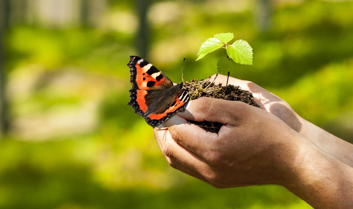 Schmetterling und Pflanze mit Erde auf einer Hand
