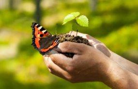 Schmetterling auf der Hand
