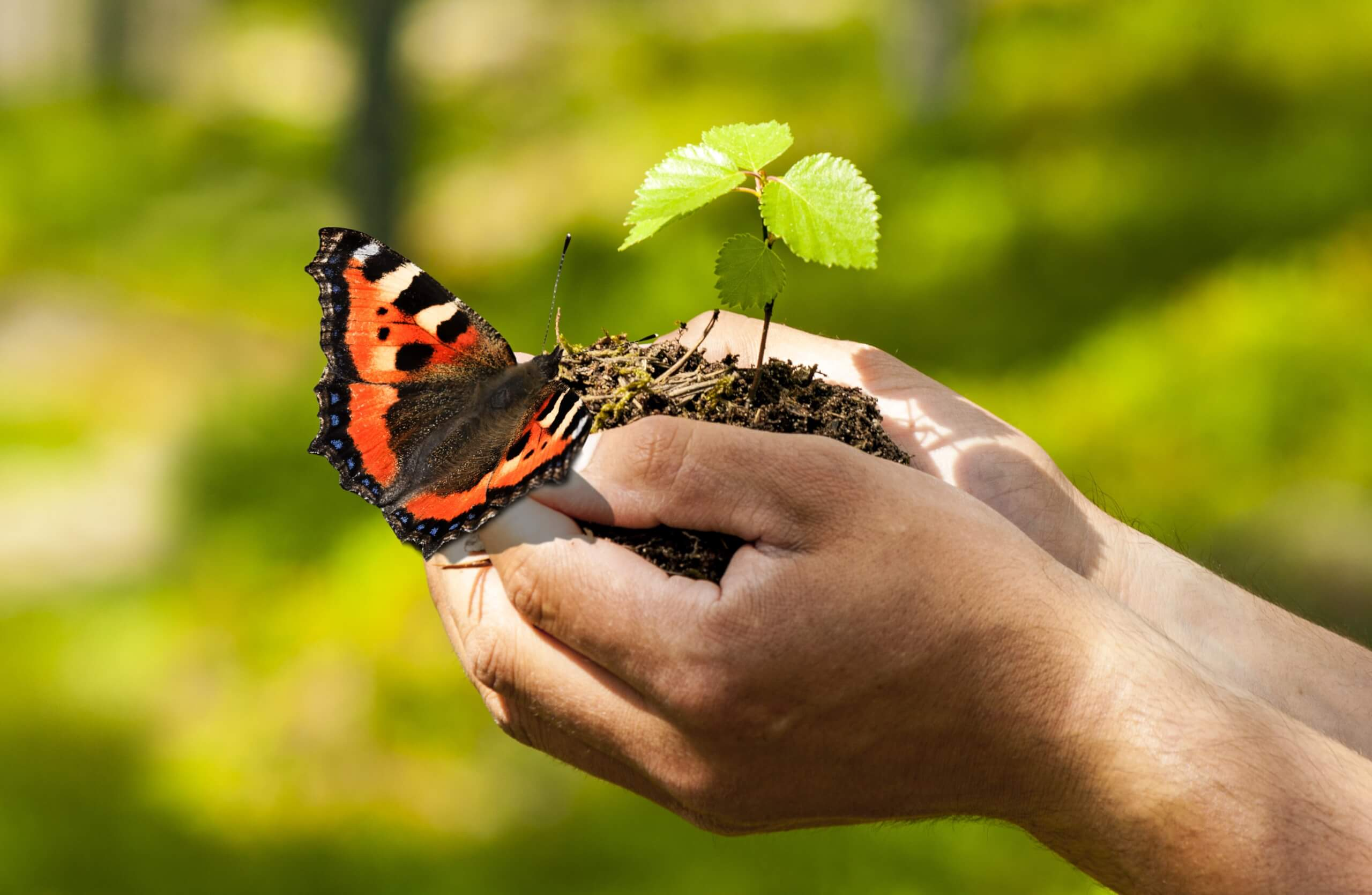 Schmetterling auf der Hand, © by-studio – stock.adobe.com.