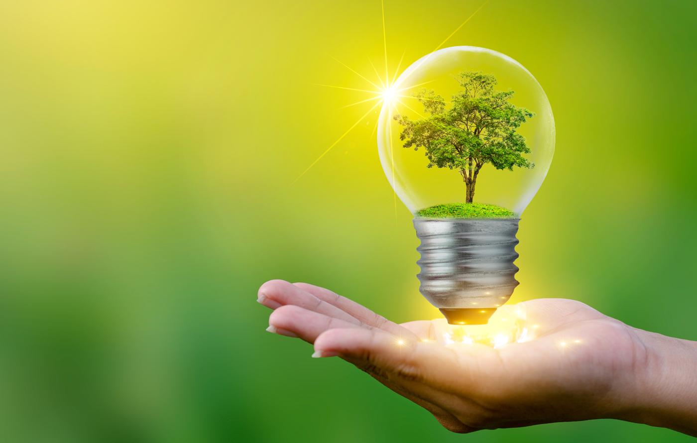 Collage: Glühbirne mit Baum im Innern auf einer Hand. Foto: © Sarayut_sy/stock.adobe.com