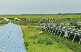 Solarpark mit Wiese und Schaf - ©sergiymolchenko - stock.adobe.com