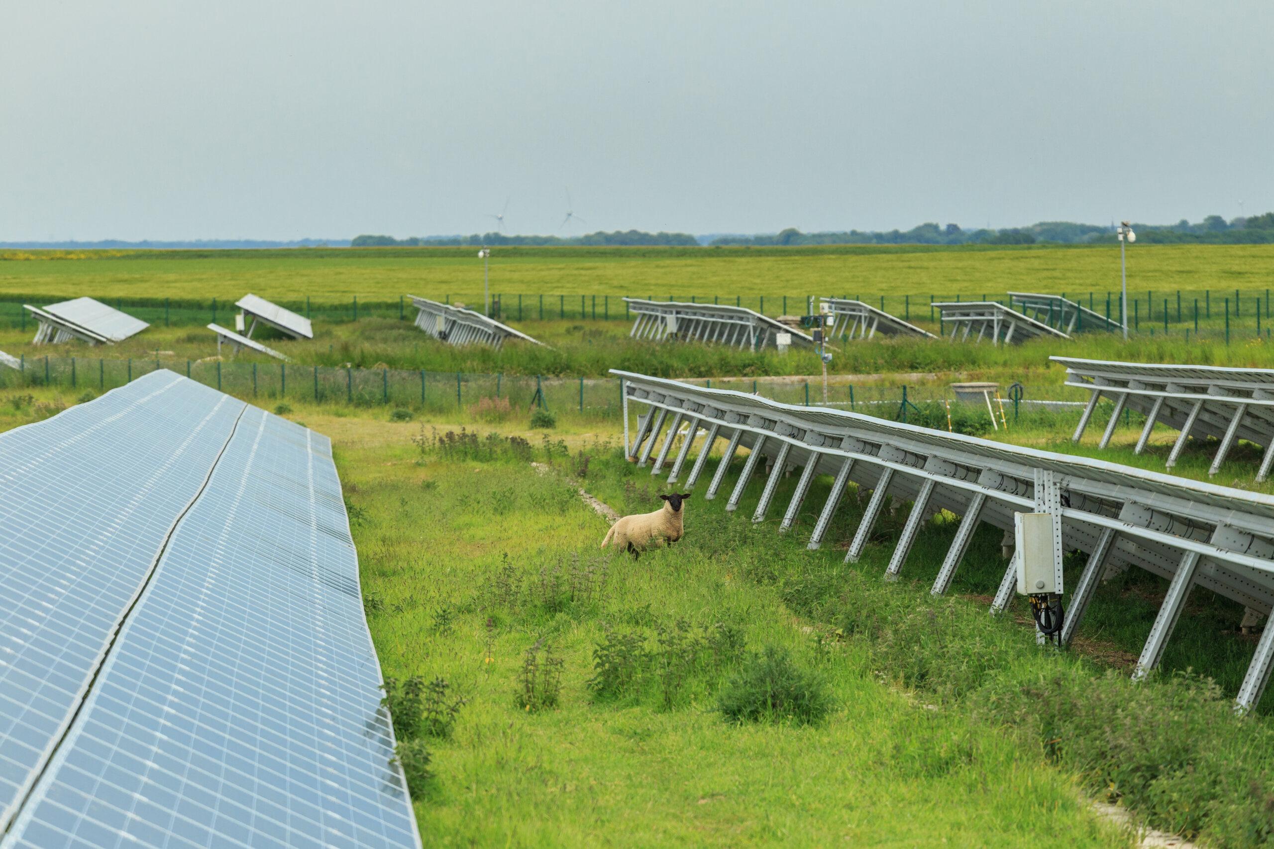 Solarpark mit Wiese und Schaf