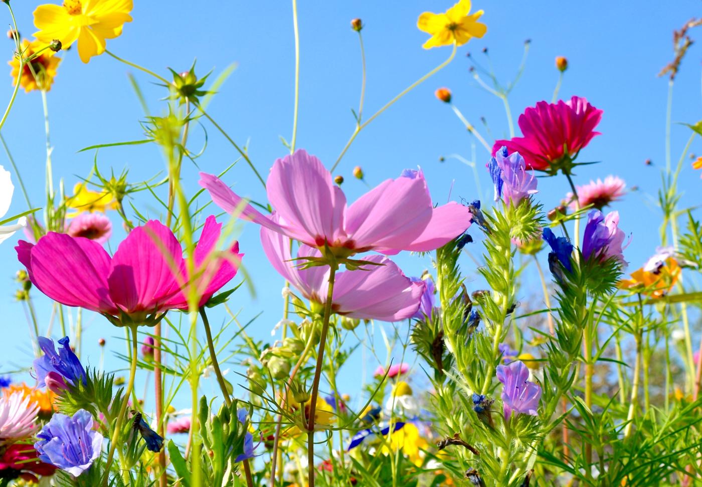 Blumenwiese, AdobeStock S.H.exlusiv