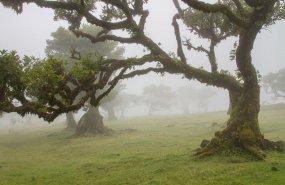 Lorbeerwald_Madeira_Foto-adege_Pixabay