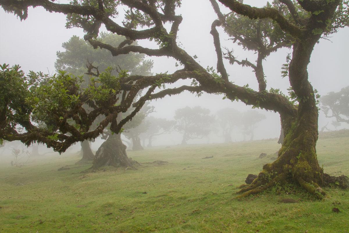 Blick auf den Lorbeerwald auf Madeira.