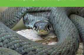 Screenshot der Titelseite der Publikation, Foto-Ringelnatter-Bernd Flicker