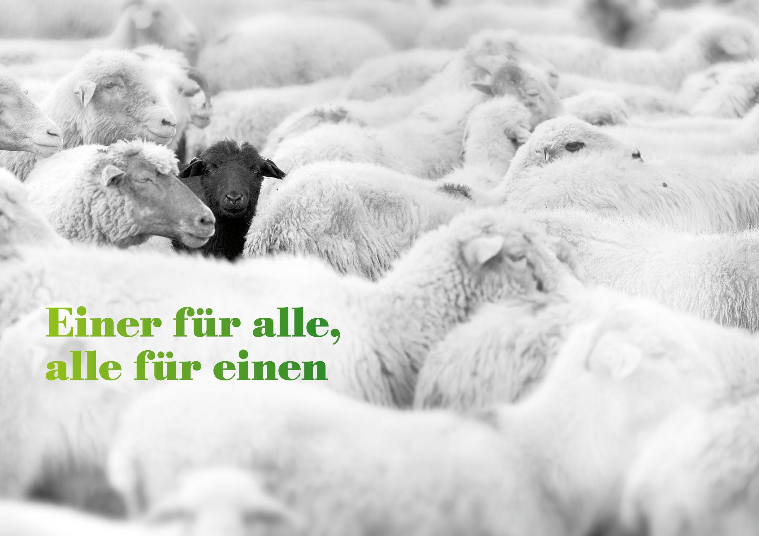 Weiße Schafherde mit einem schwarzen Schaf