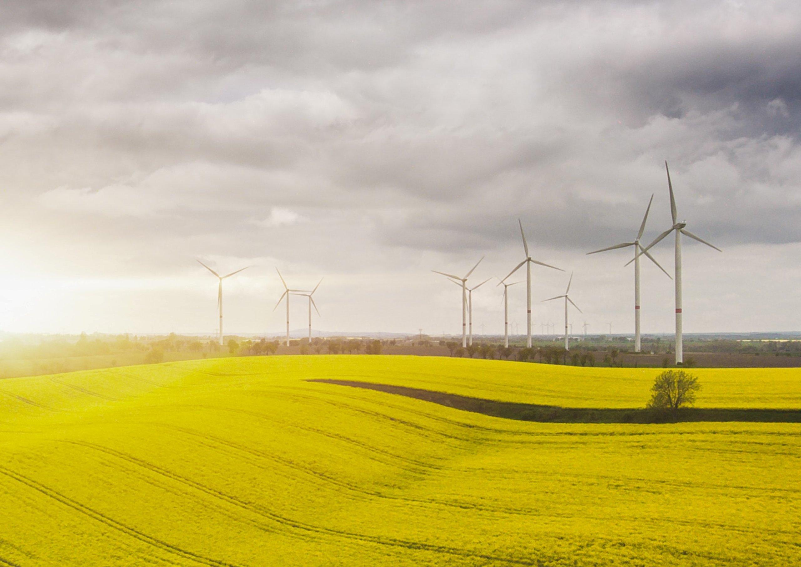 Windenergieanlagen und Rapsfeld