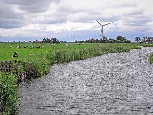 Kuehe auf der Weide am Fluss mit Windenergieanlage im Hintergrund.