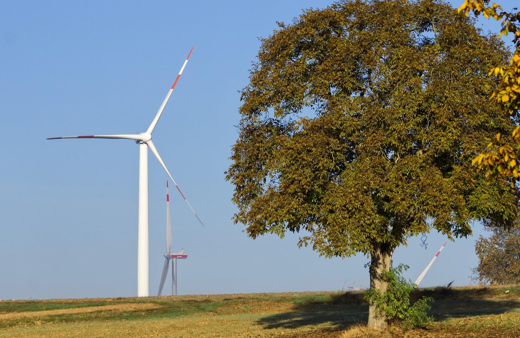 Windenergieanlage mit Baum