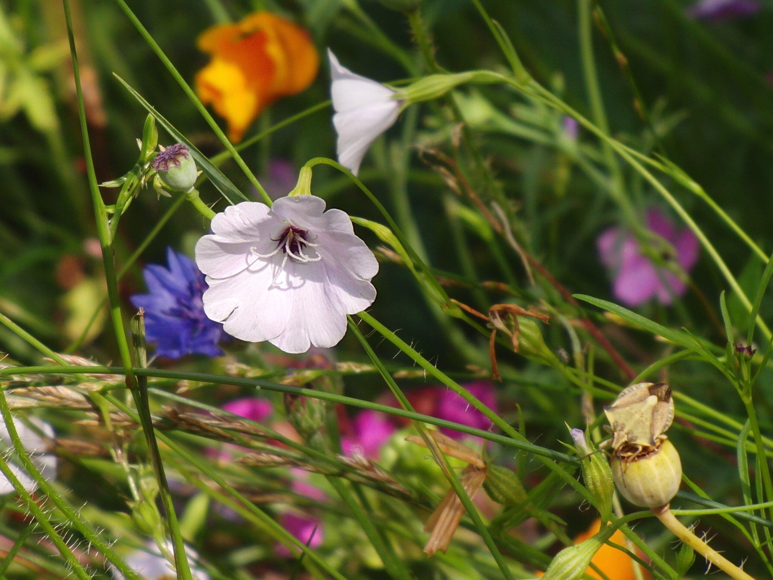 Blumenwiese_von_alsterkoralle-Pixabay